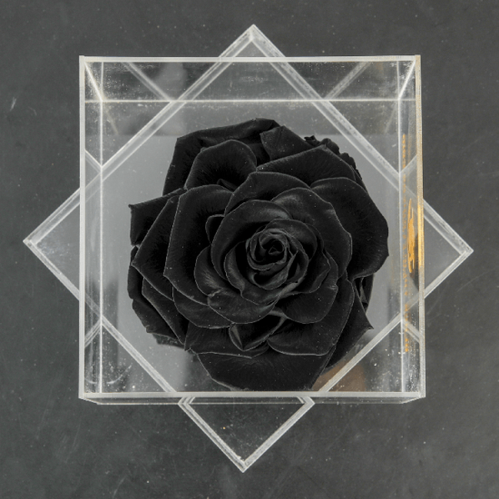 LONG LASTING ROSE - BLACK