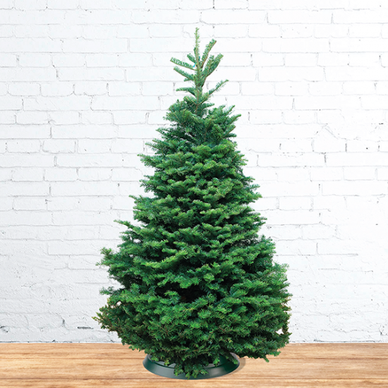 Natural Noble Fir Christmas Tree