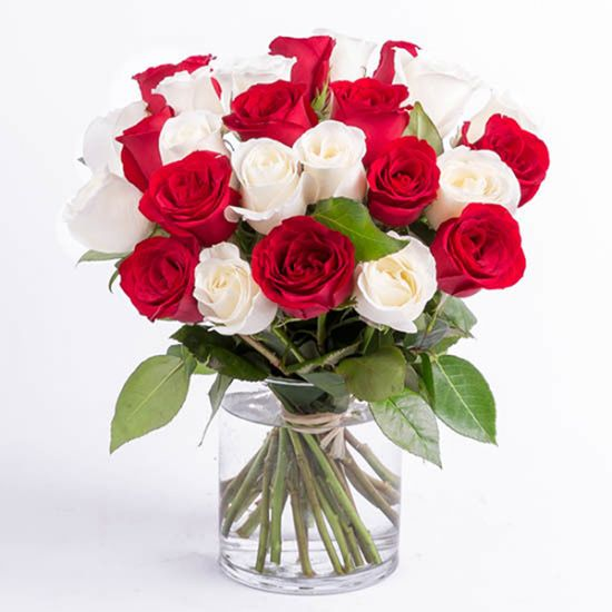 Lovely Red and White Roses