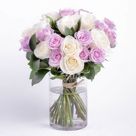 Lovely Purple and White Roses