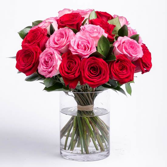 Lovely Red and Pink Roses