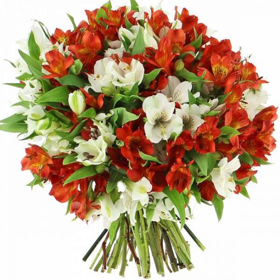 Bouquet Red & White Alstroemeria