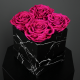 Long Lasting Preserved Fuchsia Rose in a Black Box